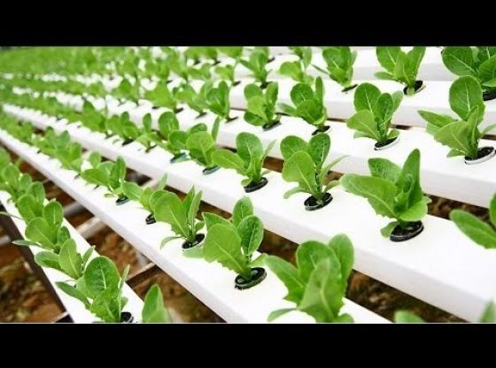 Clasimex.com Cómo tener Cultivos Hidropónicos Hydroponics