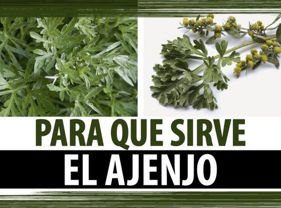 Clasimex.com PARA QUE SIRVE EL AJENJO | PROPIEDADES CURATIVAS DEL AJENJO Lifestyle